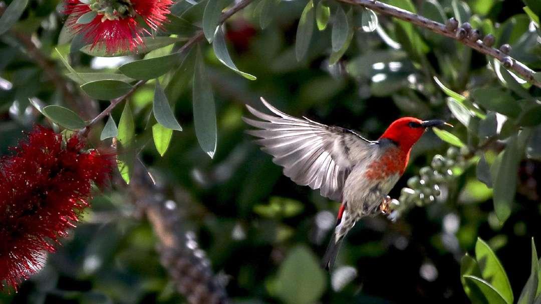 Attract Native Birds to Your Garden